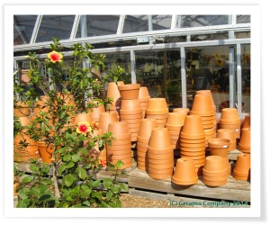 Terra Cotta Flower Pots at Retail