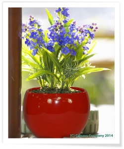 Luna Sphere Indoor Flower Pot