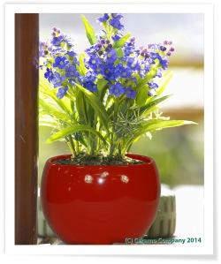 Luna Sphere Indoor Flower Pot