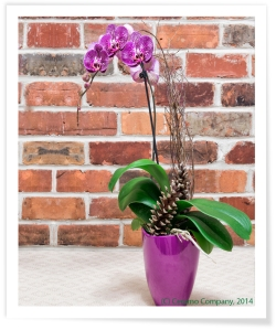 Square Orchid Pot- Violet - Snap